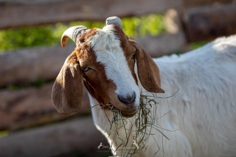 Patenschaften im Tierschutzverein